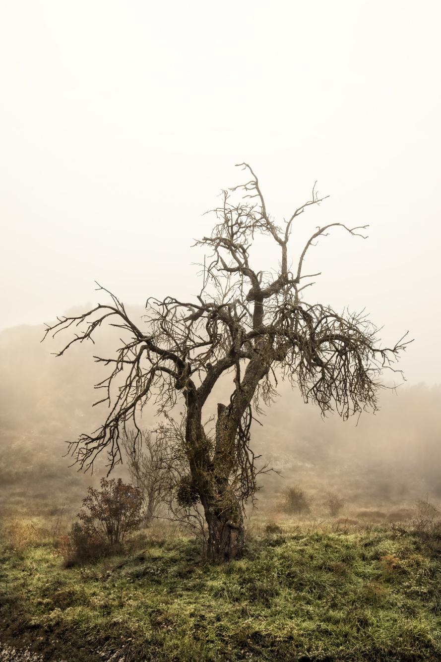 albero scheletrico