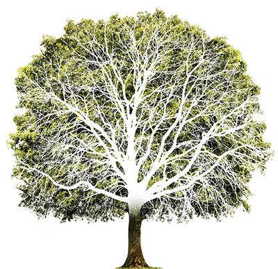 Grne Eiche mit Baumstamm