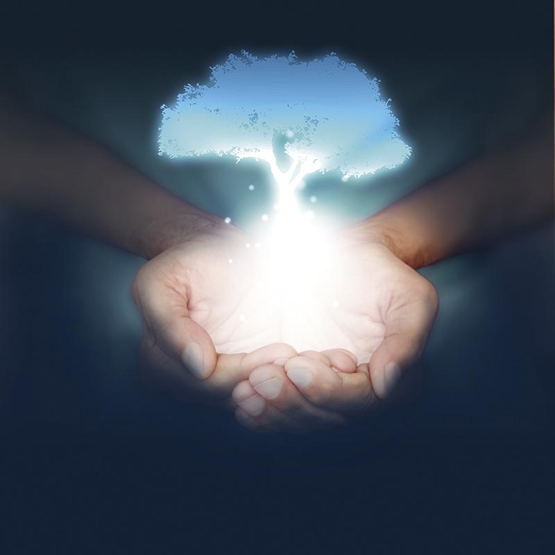 mani, albero, pianta, nascere, nascita
