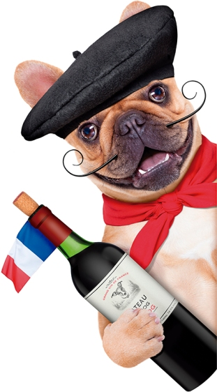 french bulldog with french beret hat, isolated on white backgr